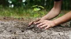 Tu știi să plantezi corect un puiet? Iată instrucțiunile detaliate